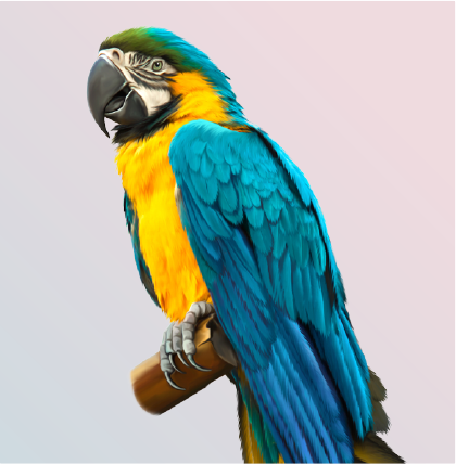 blue and Gold Macaw also called Blue and Yellow Macaw sitting on perch