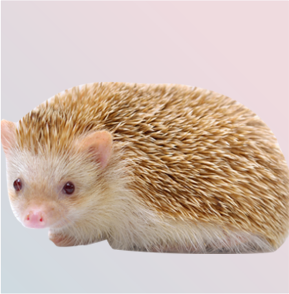 Hugh's Hedgehog